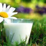 Ромашка с молоком
