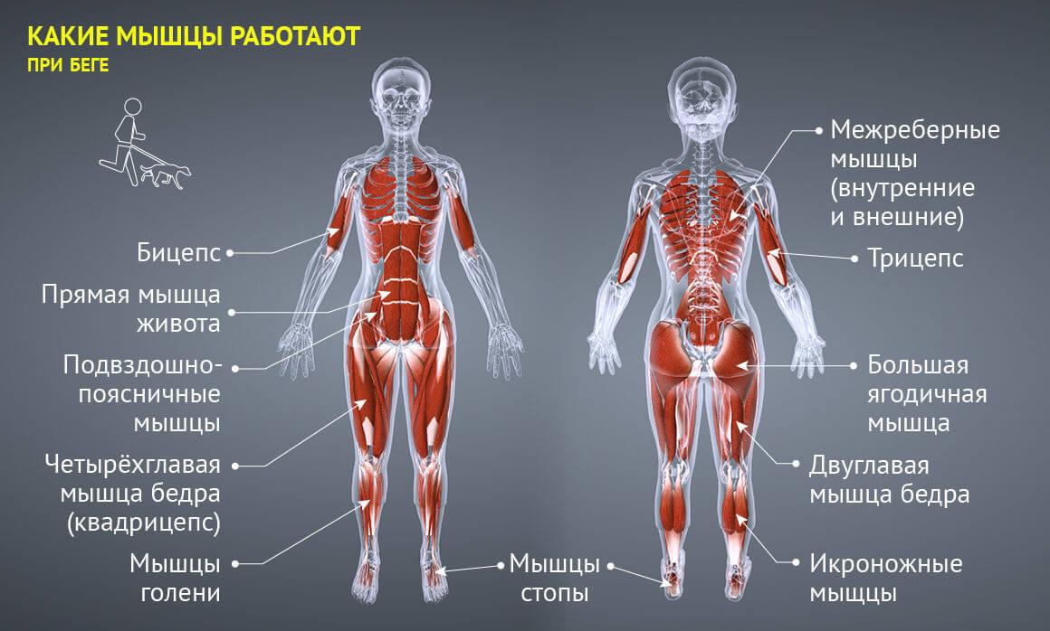чем полезен бег и какие группы мускул при этом качаются
