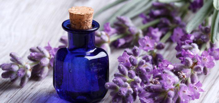 Эфирное масло лаванды свойства для кожи