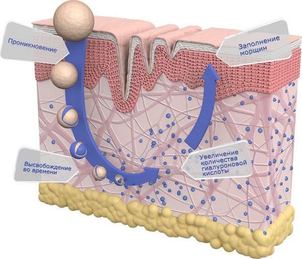 Механизм биоревитализации