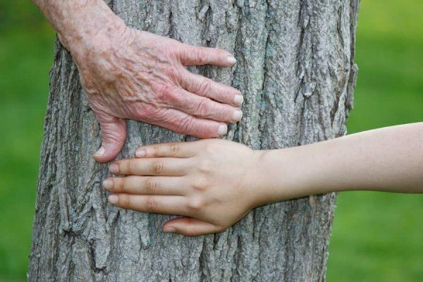 Старая и молодая ладони на стволе дерева