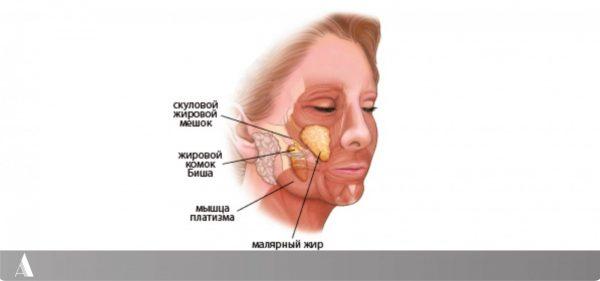 Жировые отложения на лице