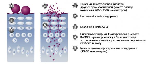 Отличие низкомолекулярной гиалуроновой кислоты от высокомолекулярной