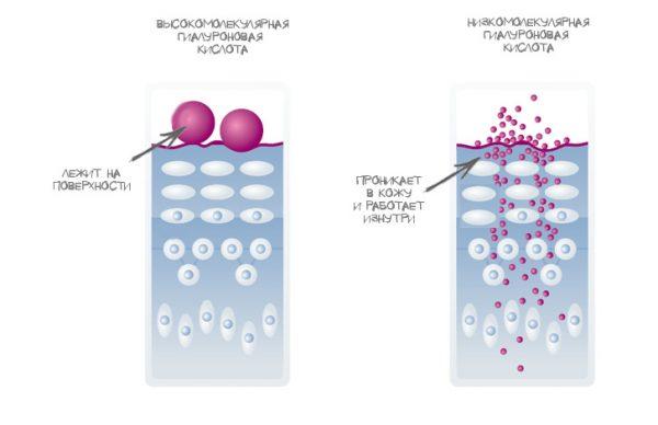 Схема проникновения гиалуроновой кислоты под кожу