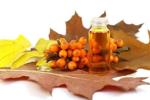 Облепиховое масло и облепиха на листьях