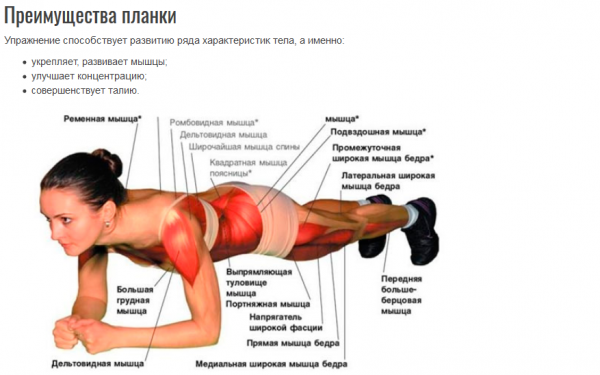 Упражнение планка с описанием мышц и воздействием на них