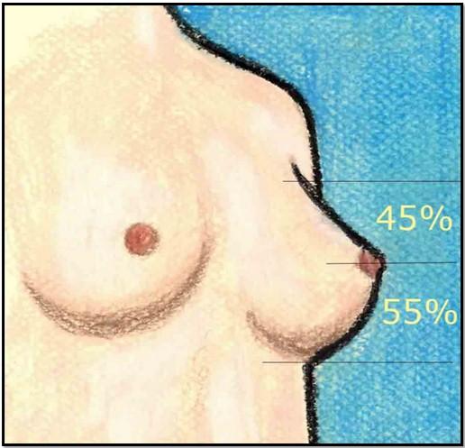 Женская грудь в здоровом состоянии