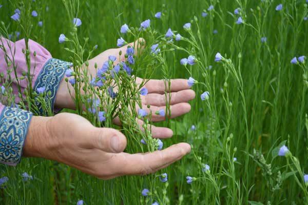 руки и цветущий лён