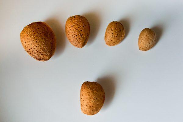 Косточки разных сортов миндаля