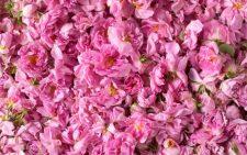Лепестки дамасской розы