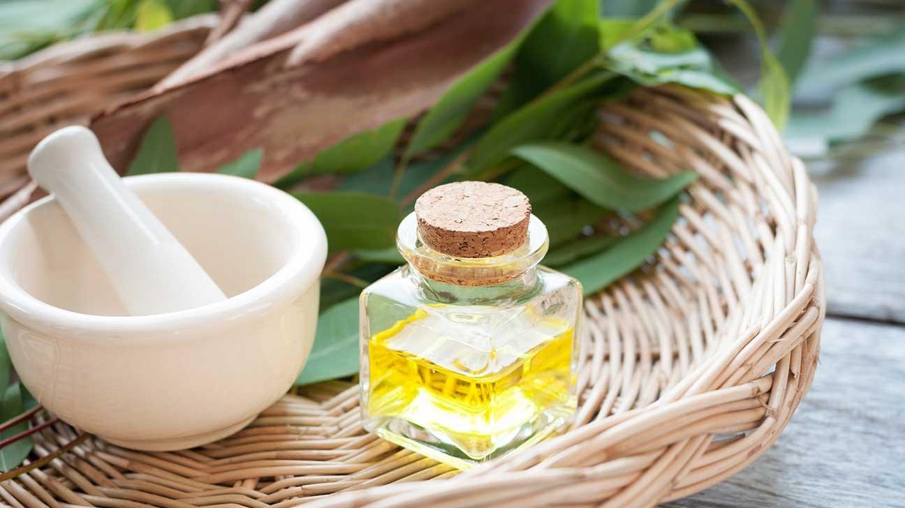 Эвкалипт — средство борьбы с кашлем. Применение и лечебные свойства