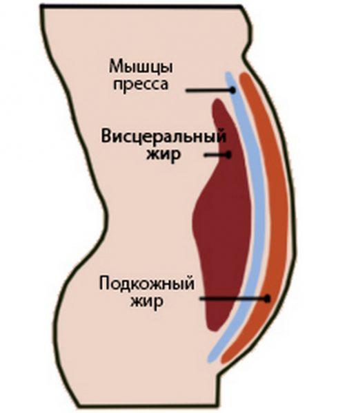схема расположения висцерального жира