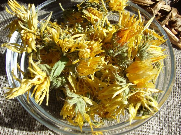 Засушенные цветки календулы