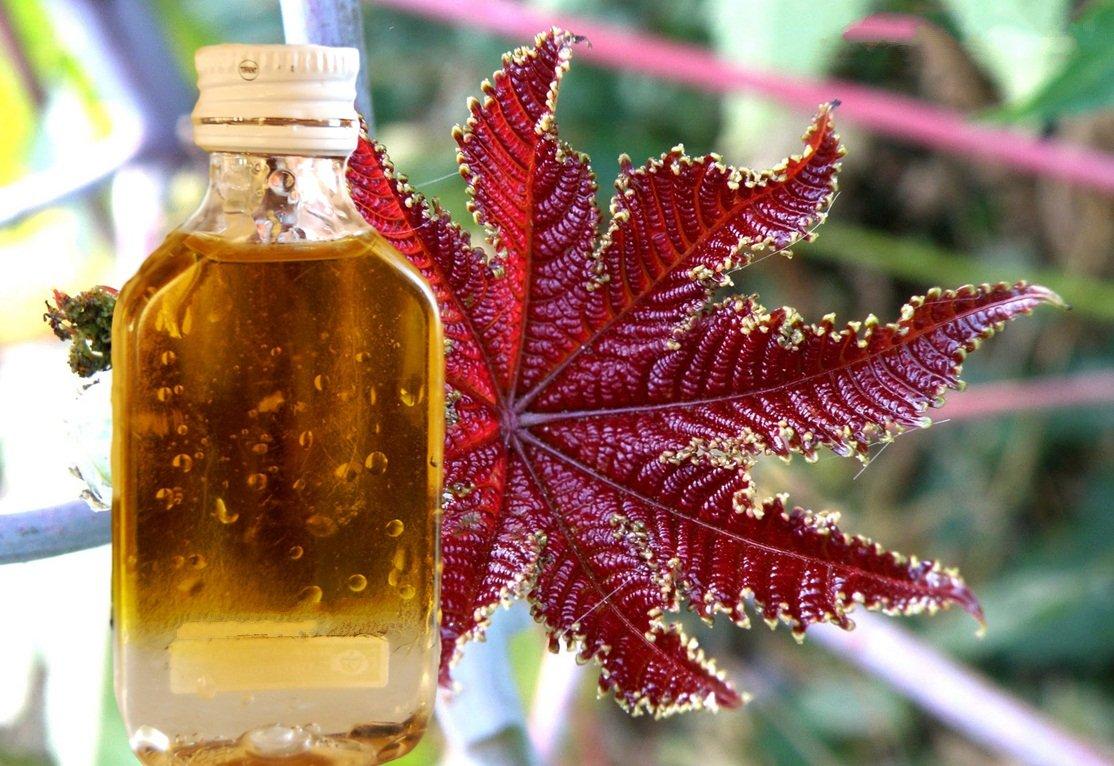 Касторовое масло применение в народной медицине и косметологии