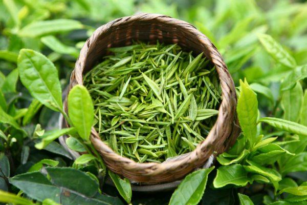 зелёный чай
