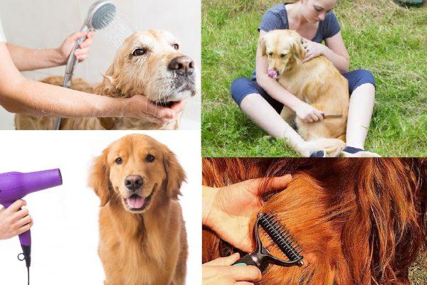 Подготовка собаки к стрижке