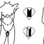 Виды мужской интимной стрижки