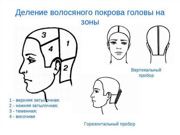 Схема деления волос на зоны