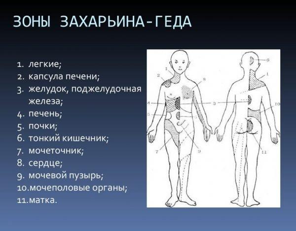 Основные зоны Захарьина-Геда