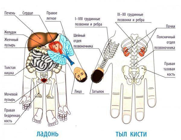 Зоны соответствия на ладонях и пальцах