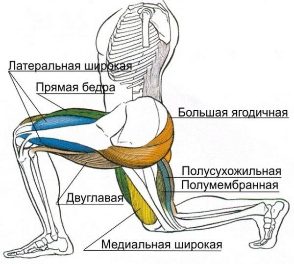 Задействованные мышцы при правильном выполнении выпадов