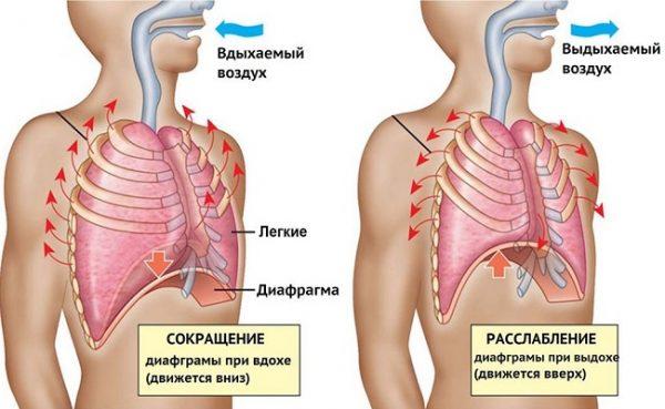 Диафрагмальное дыхание