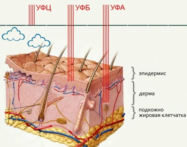 Влияние УФ-лучей на кожу