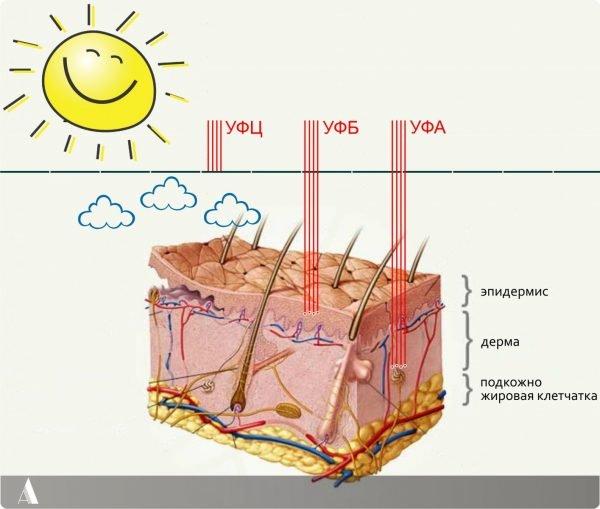 Схема действия природных УФ-лучей