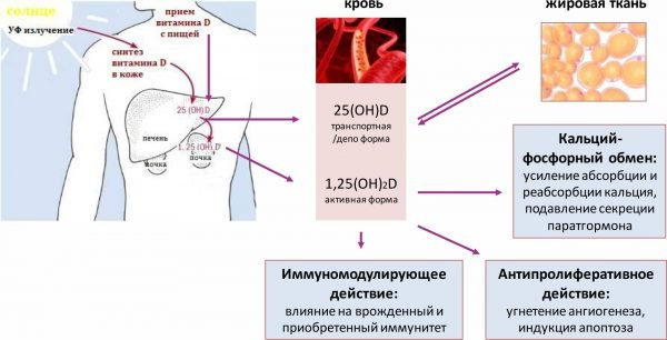 Процесс синтеза витамина D