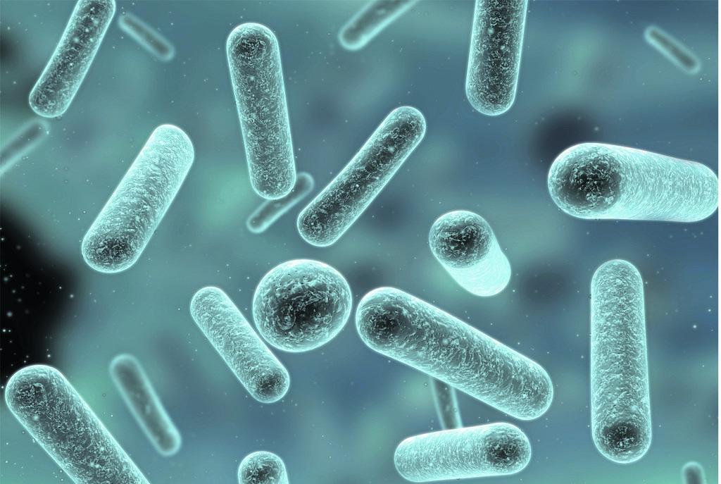 Молочнокислые бактерии картинка