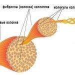 Коллаген:молекулы, фибриллы, волокна