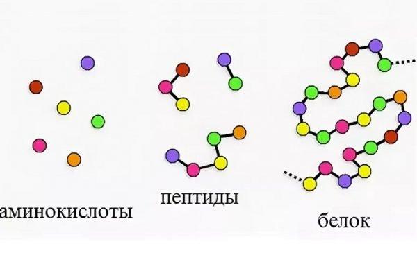 Аминокислоты, пептиды, белки